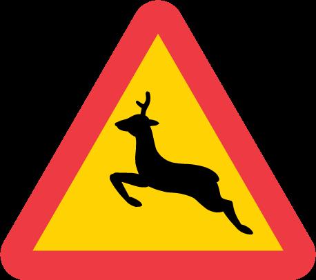 hjortdjur